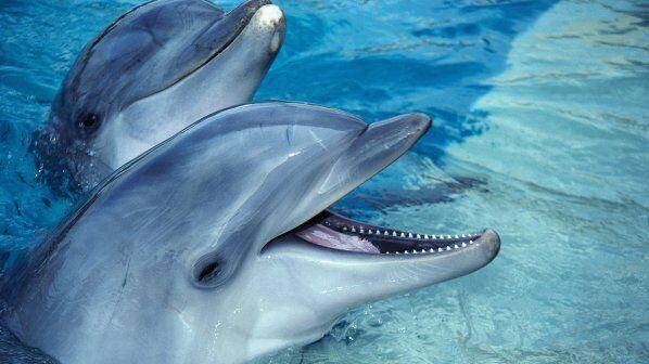 delfini-pochinaha-sled-svryhdoza-heroin-70038
