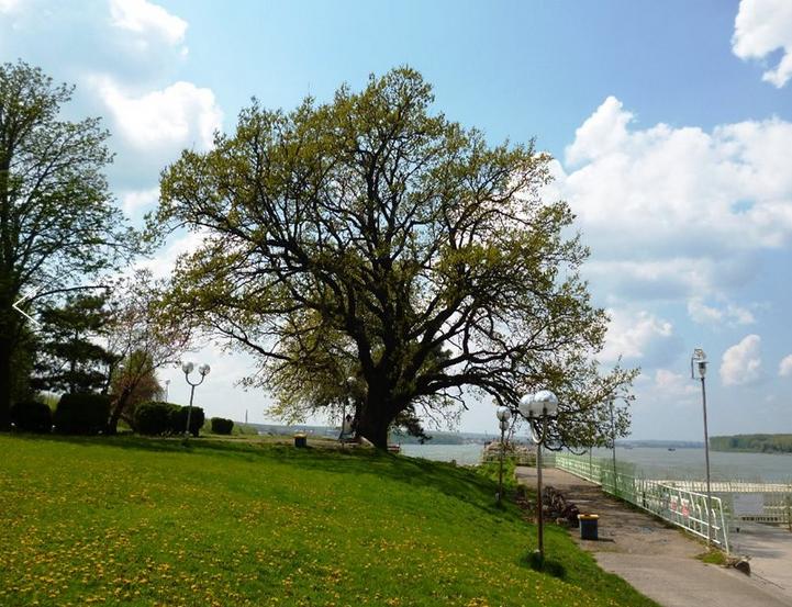 www.treeoftheyear.org/Uvod.aspx