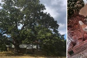 дърво с корен