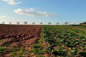 фермери в Тетевен